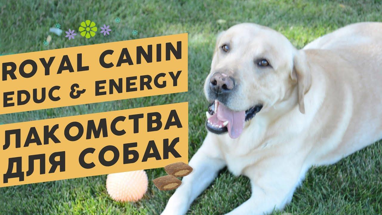 Лакомства для собак Royal Canin Educ и Royal Canin Energy